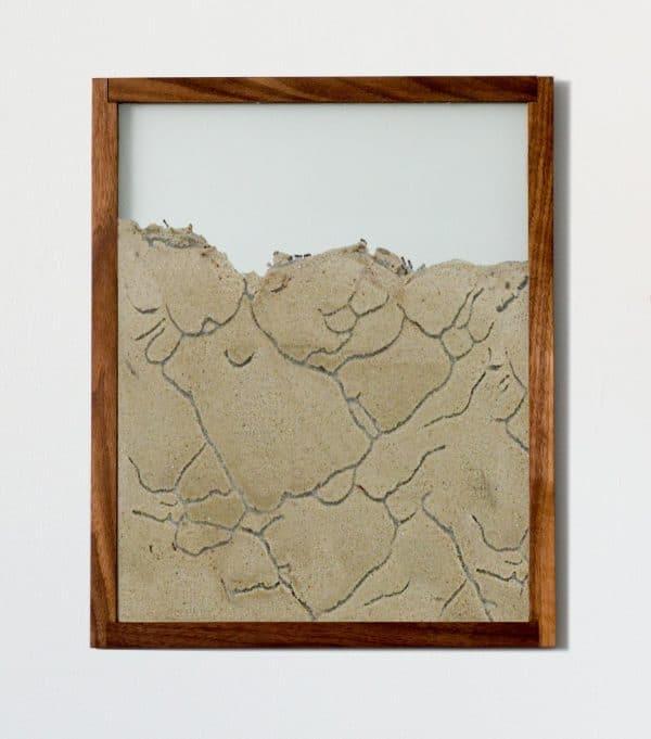 Wall Colony walnut frame designer ant farm